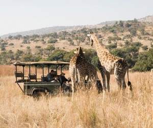 Big 5 Safari day tour