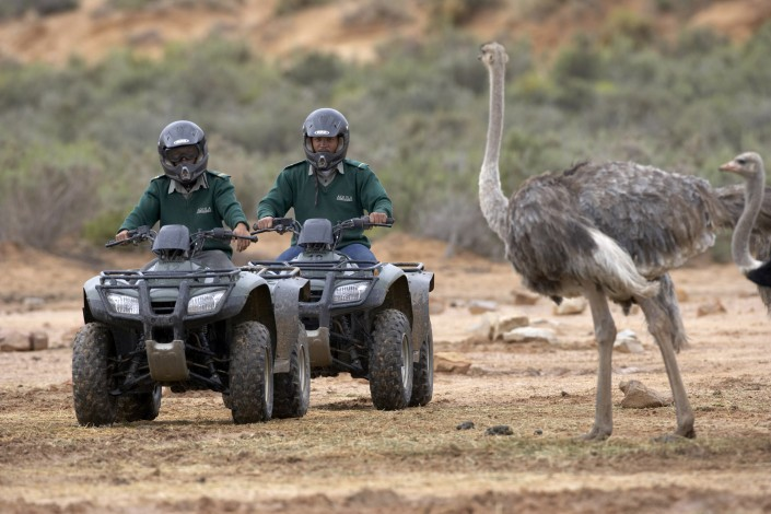Big 5 Safari day tour